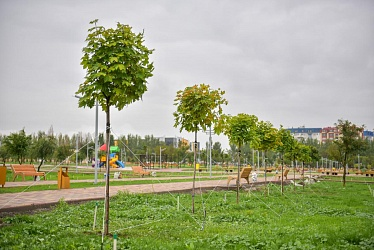 Bishkek Citizens Plant Trees in Parks Themselves